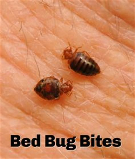 bed bug infestation timeline 1000 images about bed bugs on pinterest bed bugs all