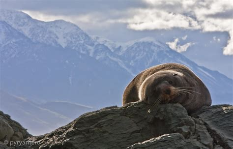 Find New Zealand Pin Kaikoura New Zealand Find Out About Peninsula Whalewatch On