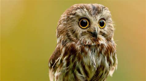 my cute baby owls youtube