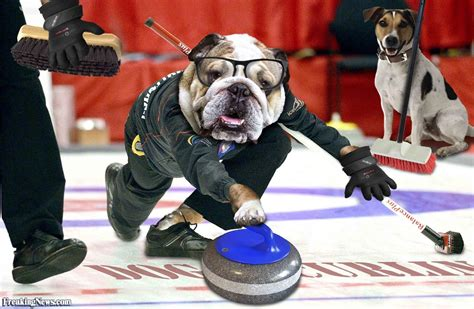 puppy curling s curling world cup pictures