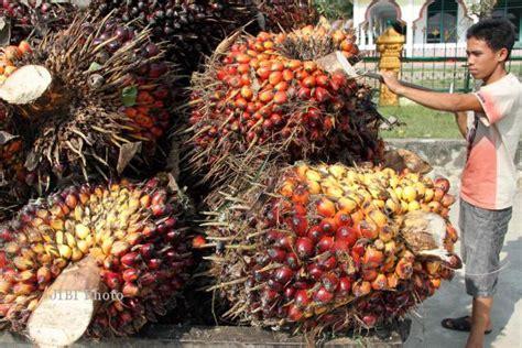 Minyak Kelapa Di Indo ditolak eropa minyak sawit indonesia dilirik iran news