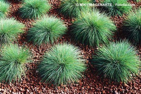 Zone Gardening - puķu lauki