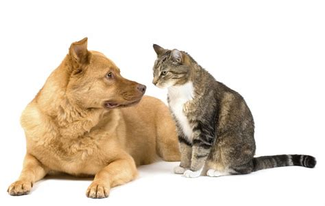 dogs cats cat vs or both