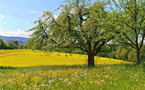 spring landscape spring meadow wallpapers wallpaper cave