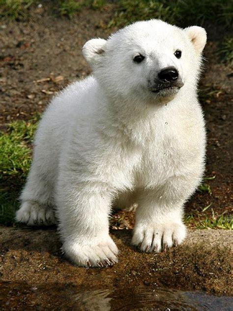 imagenes animales bonitas lista los animales mas bonitos del mundo