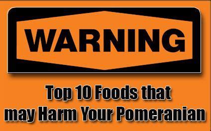 what do pomeranians eat 17 best ideas about pomeranian on teacup