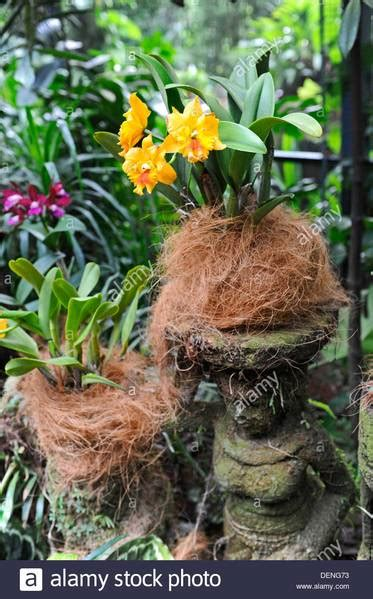 coconut fibre coir  lining baskets  mounting orchids