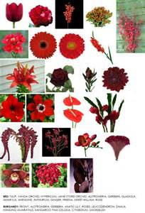flowers by color flower information modern petals
