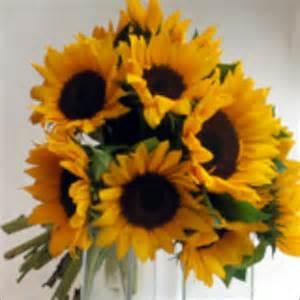 sunflower bouquet sunflower bouquet fiona at sunflowers florist weymouthfiona at sunflowers florist