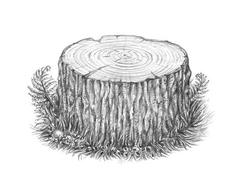 How To Draw A Tree Stump Step By Step how to draw a tree