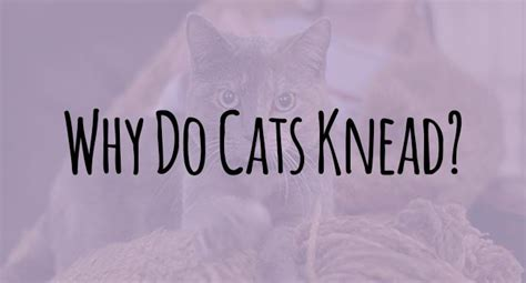 why do cats knead a surprising answer