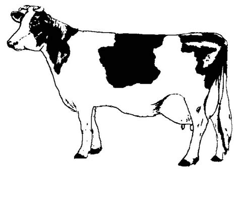 skinny cow coloring page skinny cow coloring page coloring pages
