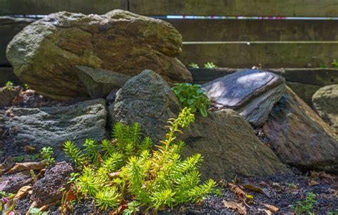 steingarten anlegen amp gestalten ideen bilder beispiele