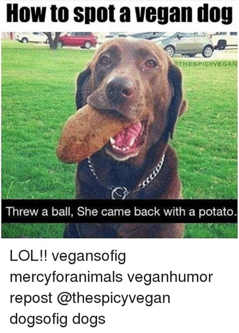 how to dogs how to spot a vegan othespicy vegan threw a she came back with a potato lol