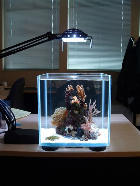 Small Home Aquarium Small Lighting Aquarium Design Image Photos Pictures