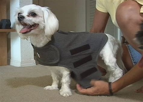thunder blanket for dogs 17 best images about thundershirt in the news on anxiety recent