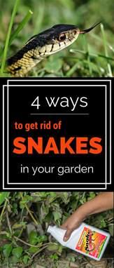 Garden Snake Get Rid Of 4 Ways To Get Rid Of Snakes In Your Garden Gardentipz