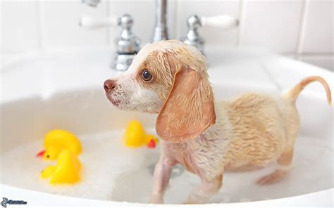 hunde waschbecken welpe