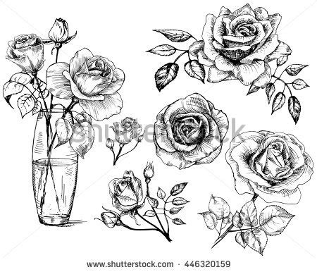 rose drawing stock images royalty free images amp vectors