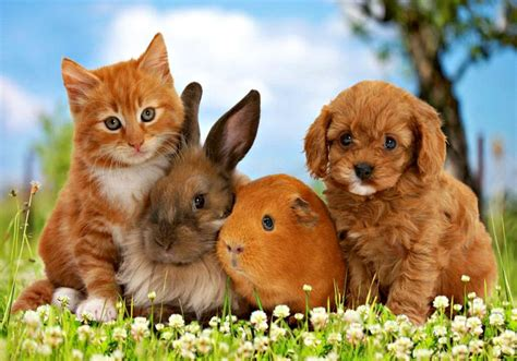 puppies and kittens together puppies and kittens and bunnies oh my eat pray vote