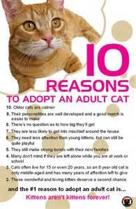 Cat Adoption Casa Camano Animal Shelter Association