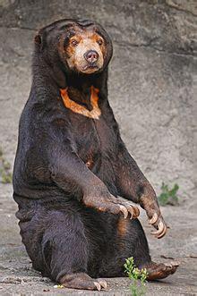 Beruang Thailan bie sun