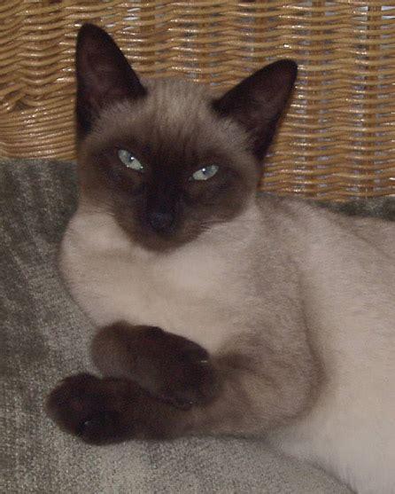 Universal Kitten universal radio customer cats