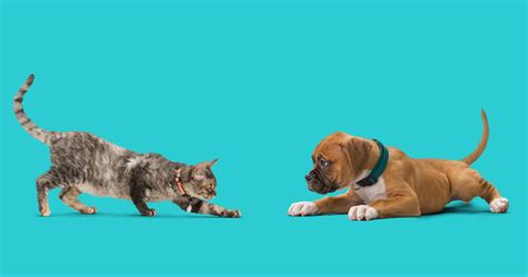 difference between and dogs differences between cats and dogs banfield pet hospital 174