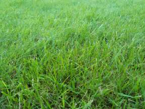 file grass summer 2012 jpg wikimedia commons