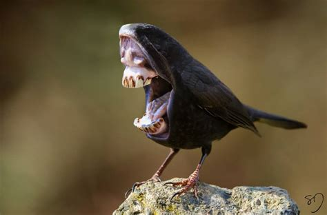 hilariously strange manipulated   birds  big mouths   beaks