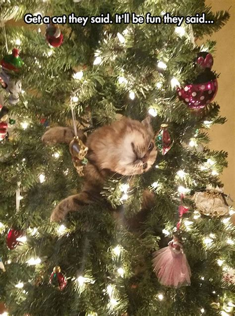 cat first seen christmas tree just cats the mouse house tree a recipe