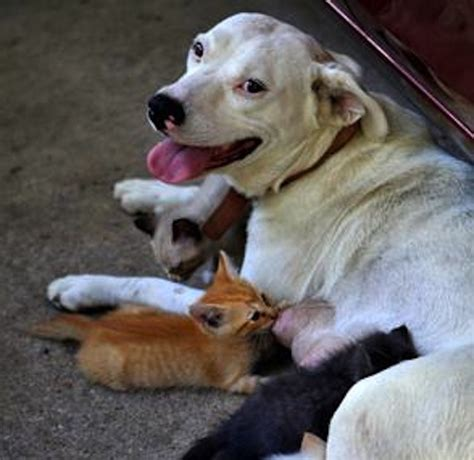 what to feed newborn puppies without molly the plays to a bundle of kittens walking the