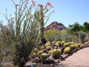 Desert Botanical Garden Botanical Gardens Phx