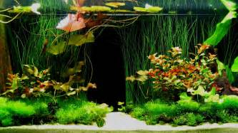 Feel free to use and share these tropical aquarium background images