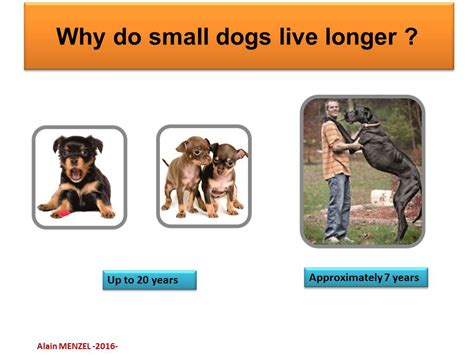 how do small dogs live pathways of aging sant 233 nutrition sport