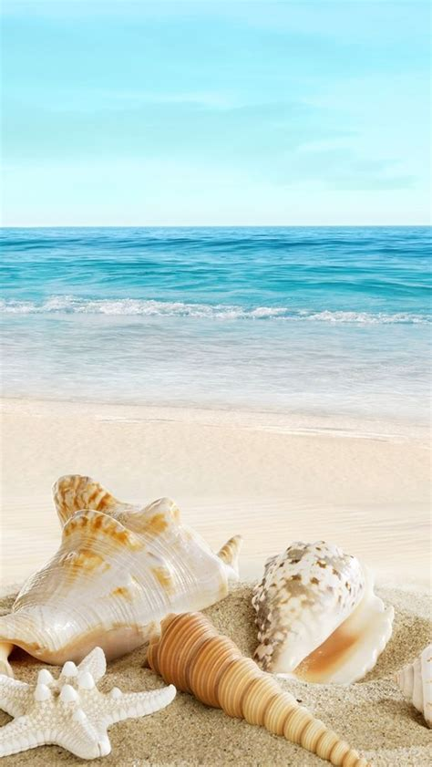 nature sunny ocean seaside beach shells iphone  wallpaper iphone se wallpapers fondos