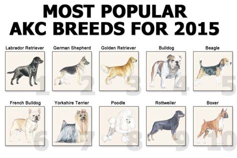 common breeds top breeds 2015