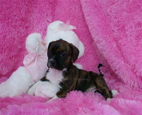 boggle puppies smoochy boggle rockin r puppies