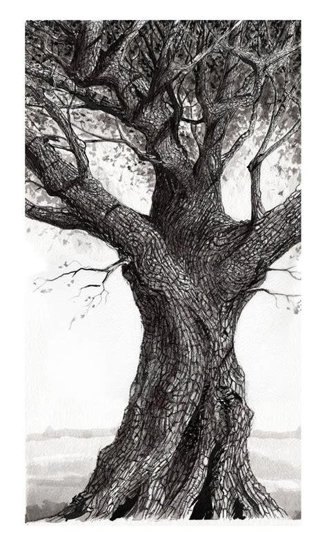 oak tree drawing best 25 oak tree ideas on pinterest big tree angel oak trees and what are the seasons