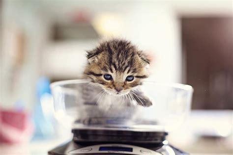 kitten nursery  friends animal society los angeles