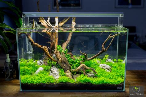 diy aquascape nano scapi sequa