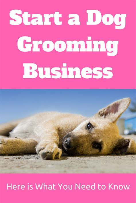 when should you start a puppy 25 best ideas about grooming business on pet grooming grooming