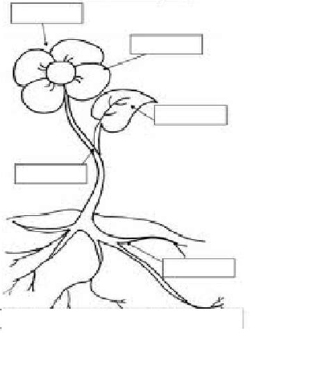 Kidzworksheets Kg Kids Science 1 Parts Of A Plant Coloring Page