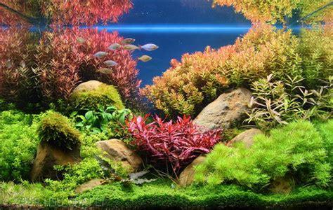 Aquarium Inrichting Ideeen het aquarium inrichten