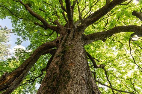 tree images il 21 novembre 232 la giornata nazionale degli alberi lifegate