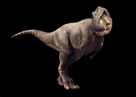 t rex our favourite dinosaurs hodderscape