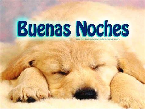 imagenes k digan buenas noches im 225 genes de perritos tiernos con frases de buenas noches