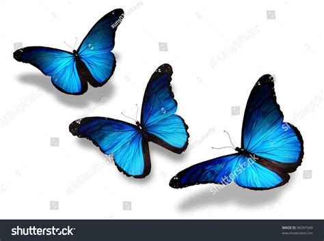 Three Blue Butterflies Flying Isolated On Stock