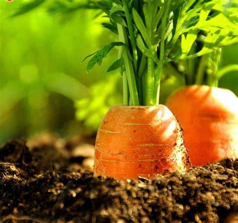 Tinggi 11 Bisa Ukir Nama jenis tanaman dataran tinggi yang bisa dijadikan sebagai tanaman budidaya sistemhidroponik