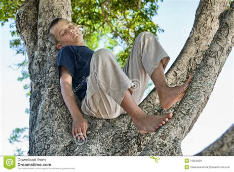 boys tree boy in a tree royalty free stock images image 10854009